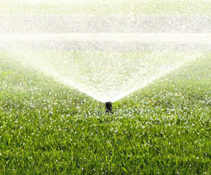 Irrigation Management